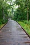 木板走道线索森林 免版税库存照片