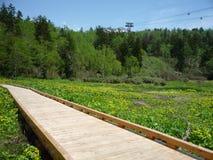 木板走道花和绿色领域 免版税库存照片