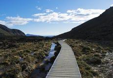 木板走道通过东格里罗国家公园,新西兰 库存图片