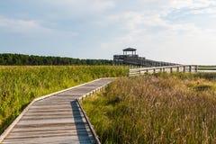 木板走道通过导致Bodie海岛灯塔观察点的沼泽地 库存图片