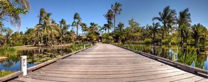 木板走道通过有荷花和植物的一个反射性池塘 免版税库存照片