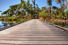 木板走道通过有荷花和植物的一个反射性池塘 库存图片