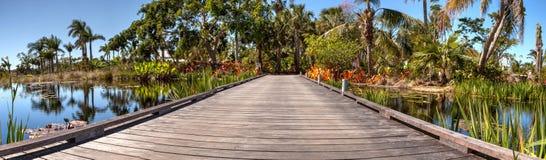 木板走道通过有荷花和植物的一个反射性池塘 库存照片