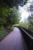 木板走道通过森林 免版税图库摄影