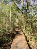 木板走道通过森林 库存图片