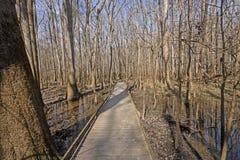 木板走道通过沼泽地森林 库存照片