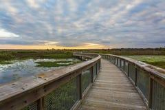 木板走道通过沼泽地-基因斯维尔,佛罗里达 库存照片
