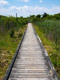 木板走道通过沼泽,开普梅灯塔,新泽西 库存照片