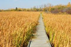 木板走道通过秋天沼泽 库存图片
