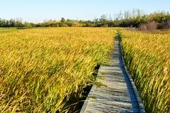 木板走道通过秋天沼泽 图库摄影
