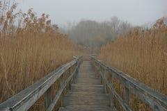 木板走道通过高海燕麦在有雾的天 免版税库存图片
