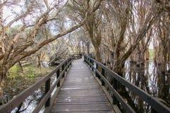 木板走道通过Melaleuca 图库摄影