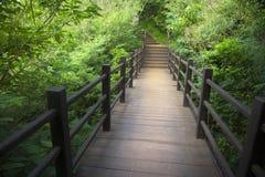 木板走道道路在森林里 图库摄影