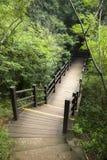 木板走道道路在森林里 免版税图库摄影