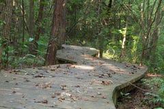 木板走道道路穿过森林 免版税库存图片