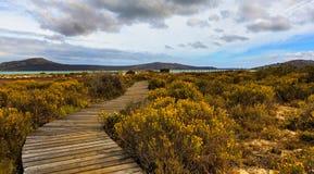 木板走道-西海岸国家公园 库存照片