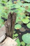 木柱子和莲花叶子 图库摄影
