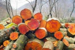 木柴的美丽如画的构成 库存图片