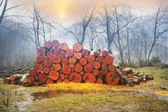 木柴的美丽如画的构成 库存照片