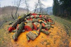 木柴的美丽如画的构成 免版税库存照片