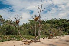 木树干和植被看法在沙子在多云天在Paraty Mirim 库存照片