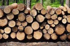木树干在森林里 免版税库存照片