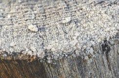 冻木树干宏观细节在一个冬天早晨 免版税库存图片