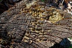 木树桩在春天森林里,有益于凝思和头脑清洁 免版税库存照片