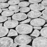 木树桩背景,黑白概念 免版税库存图片