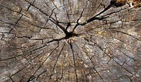 木树桩背景 库存照片