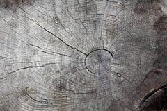 木树桩,在基地的裁减 图库摄影
