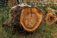 木树桩 库存照片
