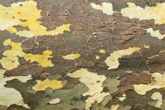 木树皮纹理模式 免版税图库摄影