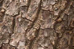 木树纹理 免版税库存照片