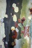 木树身体吠声 库存图片