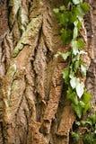 木树身体吠声 库存照片
