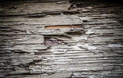 木树身体吠声 免版税库存照片
