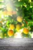 木桌和迷离橙色庭院背景 库存图片