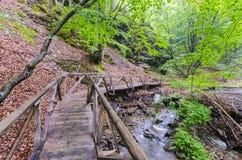 木桥在森林里,秋天 图库摄影