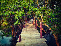 木桥在美洲红树树被充斥的雨林密林  库存照片