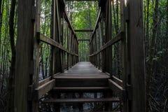 木桥在美洲红树森林里 免版税库存照片