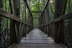 木桥在美洲红树森林里 库存图片