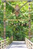 木桥在雨林里 库存照片