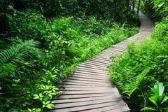 木桥梁。 库存图片