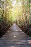 木桥梁在有外缘光的美洲红树森林里 免版税图库摄影