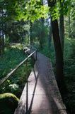 木桥梁在森林里 免版税库存照片