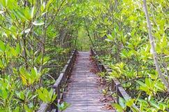 木桥梁在美洲红树森林里 库存图片