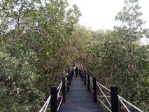 木桥梁在mangroove森林里 图库摄影