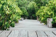 木桥走道在美洲红树森林、葡萄酒照片和选择聚焦 库存照片
