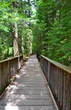 木桥足迹通过冰川国家公园 图库摄影